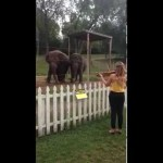 Elephants Dance to a Bach Concerto Played by Violinist Eleanor Bartsch