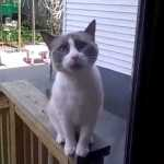 Desperate Cat Switches to Speaking French When Meowing Won't Get Him Inside the House