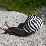 People Are Painting Eye-Catching Designs on Snails to Prevent Them From Being Stepped On