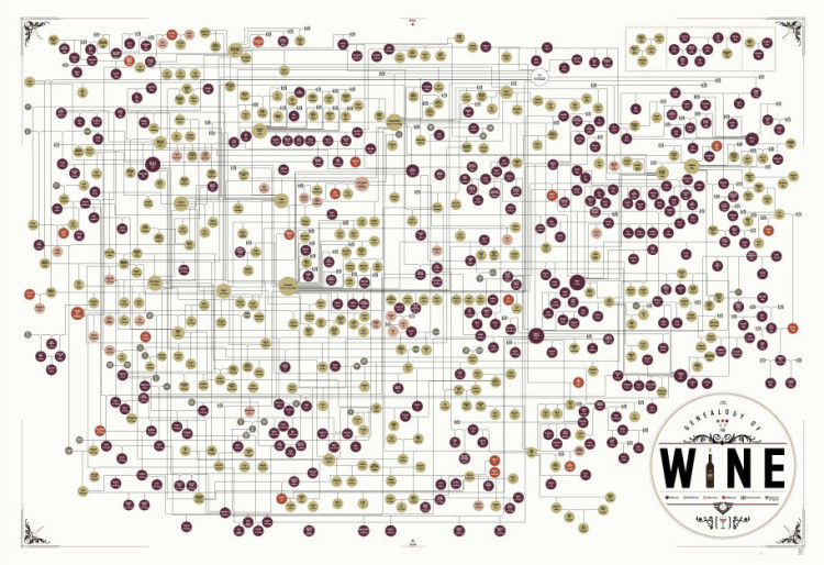 The Genealogy of Wine\u0027, An Art Print by Pop Chart Lab Tracing the