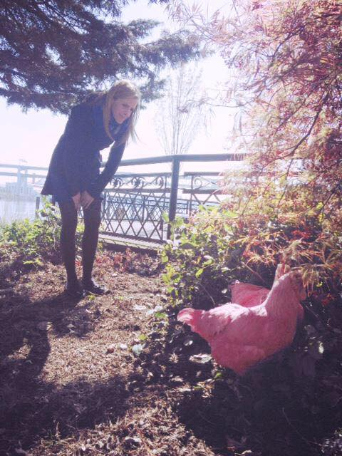 Pink chickens on waterfront