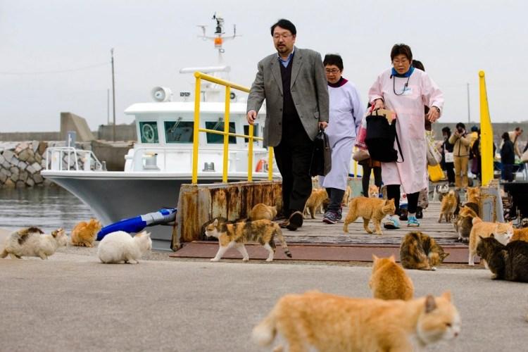 Aoshima, Miyazaki Boat