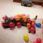 Unsuspecting Kitten Gets Caught in an Avalanche of Staticky Birthday Balloons That Stick to His Fur