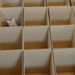 Nine Cats Thoroughly Enjoy the Cardboard Maze That Their Creative Human Made for Them