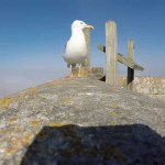 Seagull Steals a GoPro Camera and Flies Away With It Capturing Beautiful Footage of a Rugged Coastline