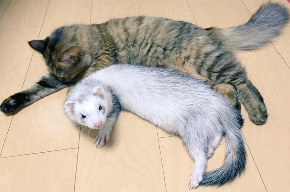 Komari and Ferret