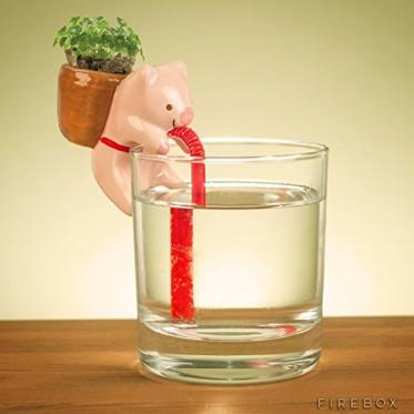 Self Watering Pig