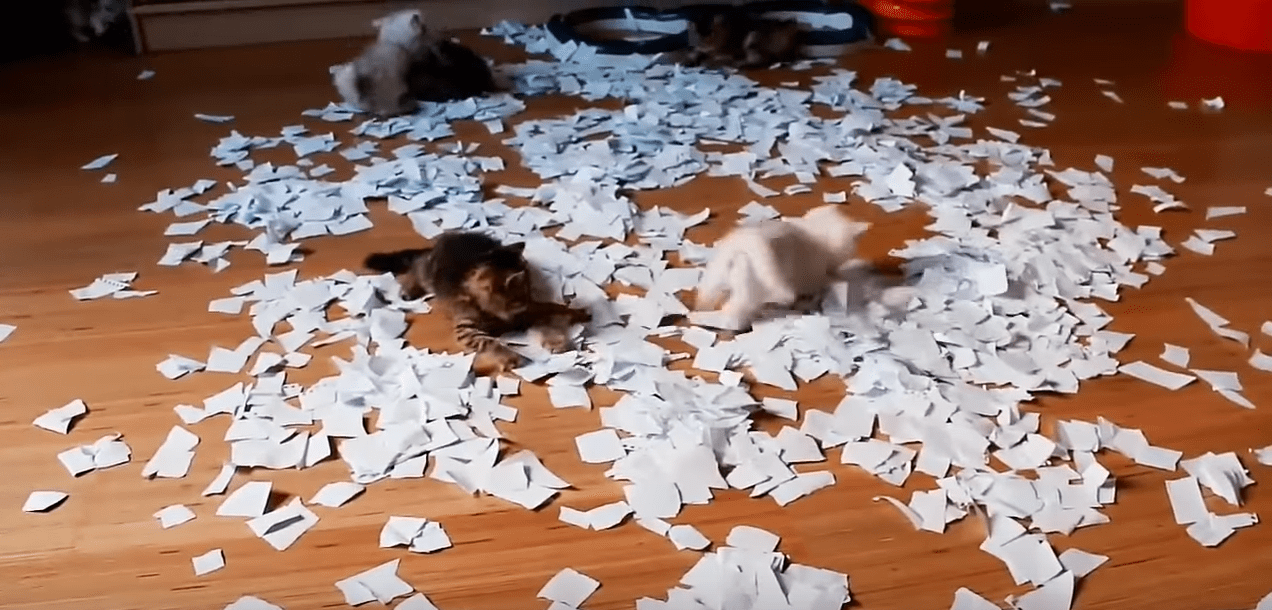 Ten Teeny Tiny Kittens Gleefully Romp Around In A Fabulous