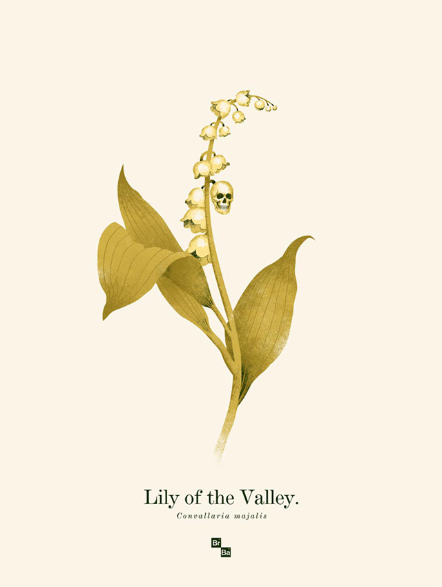 Lily of the Valley by Phantom City Creative