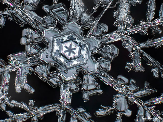 snowflake macro photography by Don Komarechka