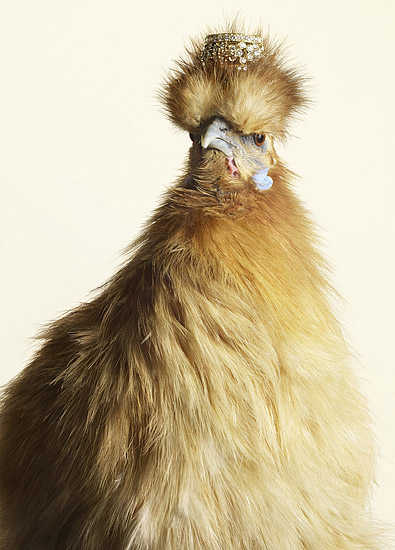 Luxury Chicks fashion chicken photos by Peter Lippmann