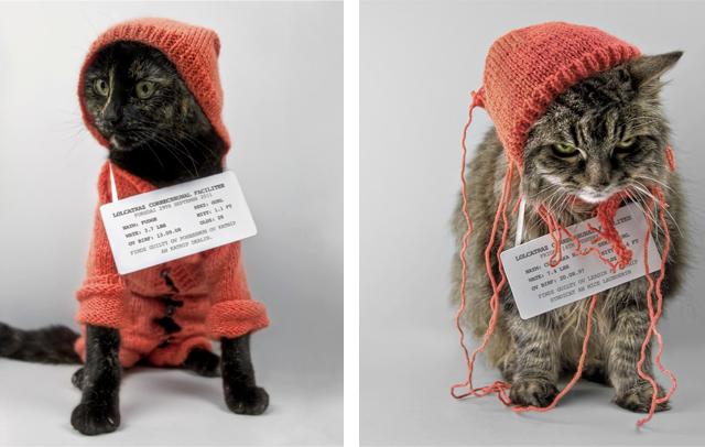 Katnip Kartel by James McKenzie-Blyth
