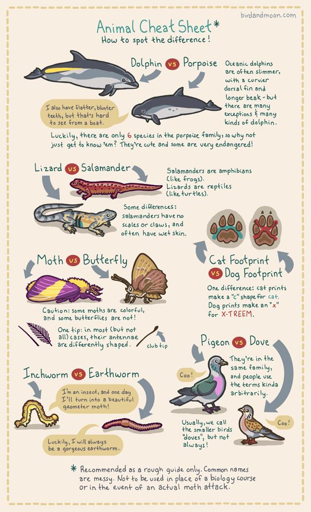 Animal Cheat Sheet by Rosemary Mosco