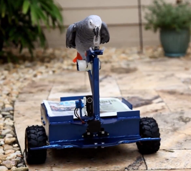 Bird Buggy by Andrew Gray