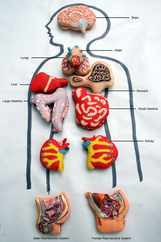Anatomical Macarons
