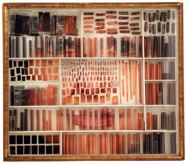 Photographic specimen portraits by Michael Mapes