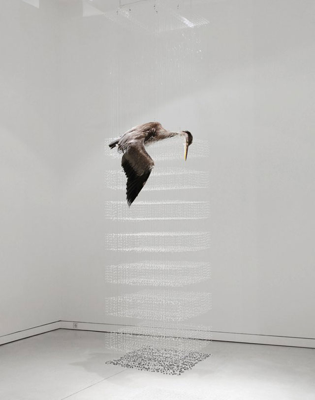 Stunning Taxidermy Installations by Claire Morgan