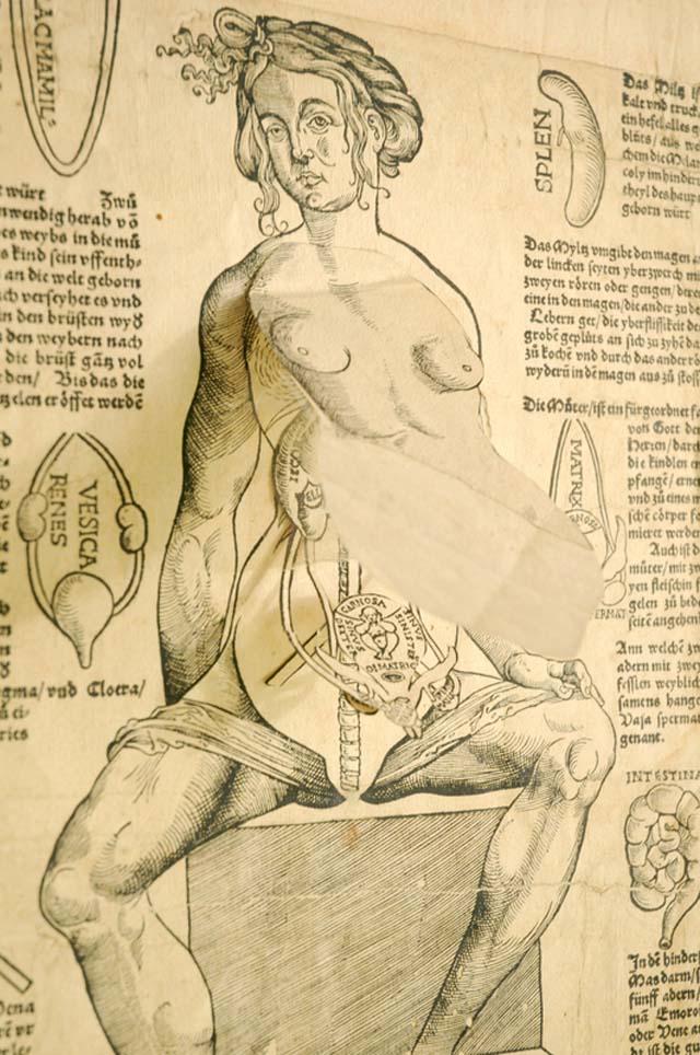 Animated Anatomies