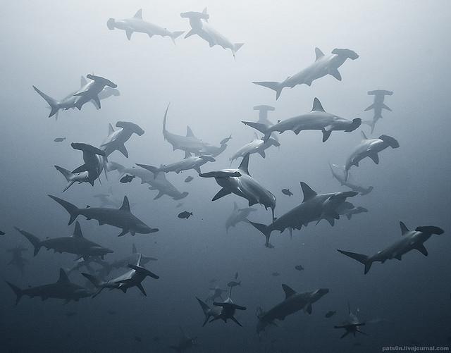 Underwater wildlife photography by Alexander Safonov