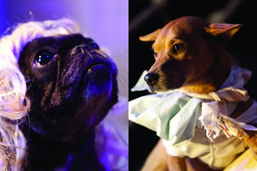 Tragedy on the Sea Nymph: An Operetta in Three Acts Starring an All-Dog Cast