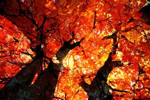 Free Fall Harvest Desktop Wallpaper I Colori Della Natura Autunno Laurin42