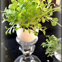 Egg Shell Planting-Perfect for Starting Plants