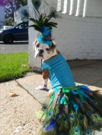 peacock dog doggie style adorable halloween costumes for dogs
