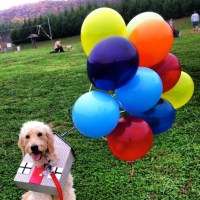 Doggie Style: Adorable Halloween Costumes for Dogs ...
