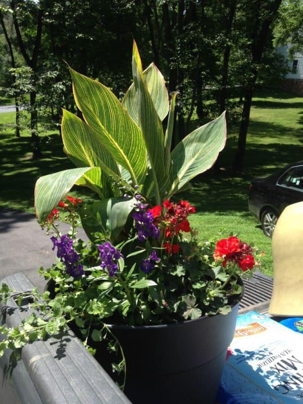 Flagstone Patio Container Gardens Are Great For Adding Character To Small