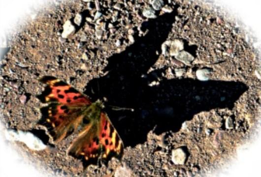 Butterflies Worth Befriending