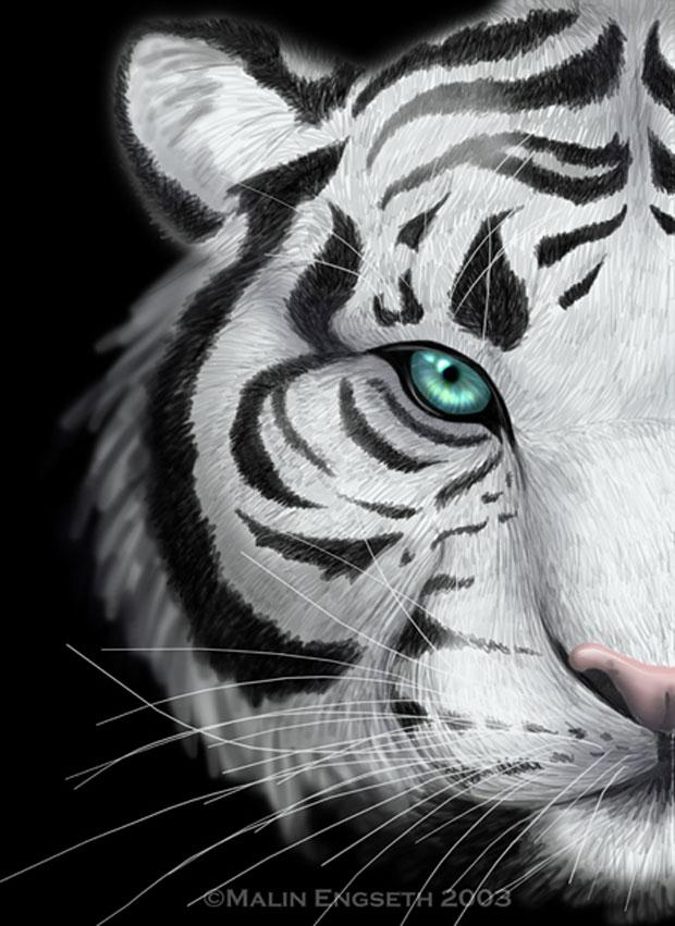 Tiger Iphone 6 Wallpaper Beautiful Tigers Lavagirl24