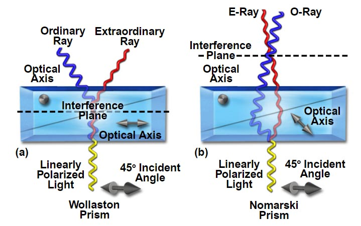 Differential Interference Contrast Microscopy