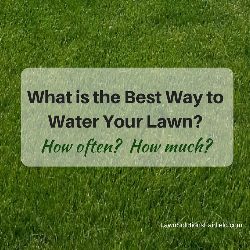 How Often Should You Water Lawn MyCoffeepotOrg