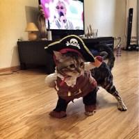 Pet Clothes-Jack Sparrow Costume Jack Costume Captain Jack ...