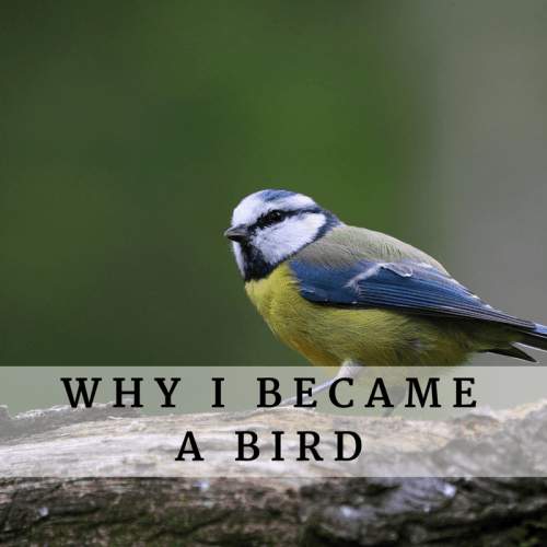 Why I became a bird