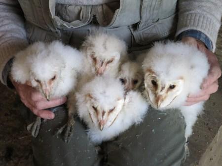 Farmland Bird Index Species