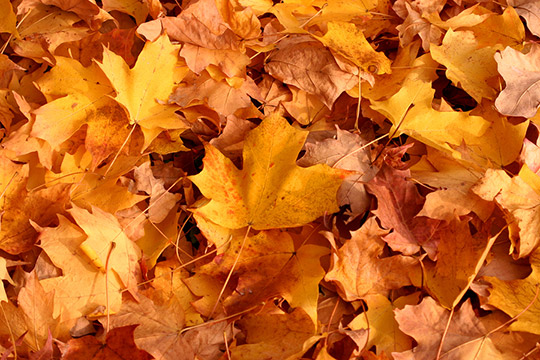 Simple Wallpapers Colors Fall What Happens To Fallen Leaves Fall Foliage