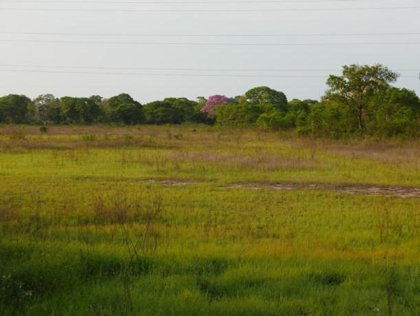 RECIT BRESIL | Le Pantanal, sans peur et sans réserve