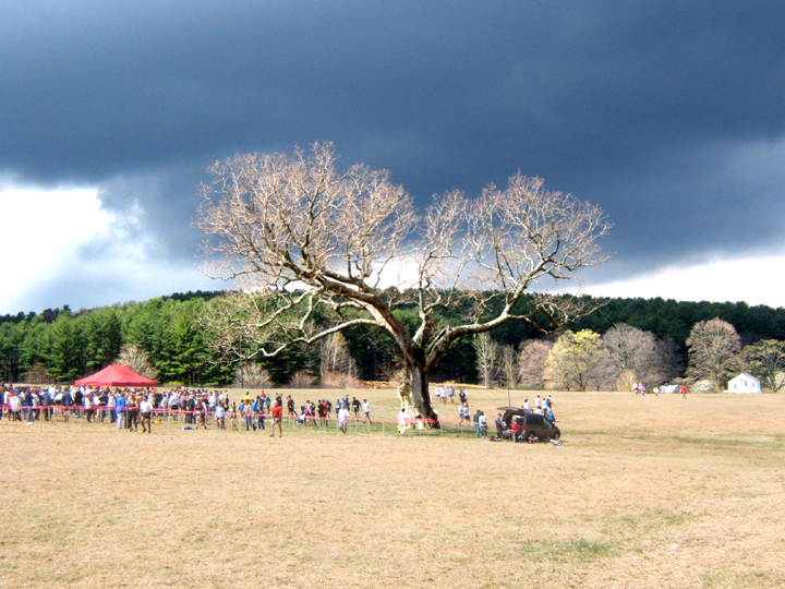 The Meadow Oak and breaking storm -- Leatherman's Loop 2003