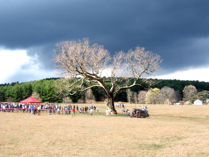 The Meadow Oak and breaking storm -- Leatherman's Loop 2003
