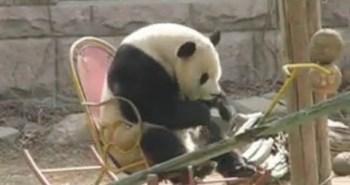 panda-rocking-chair