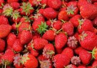 Comment ne pas être aux fraises dans la gestion de la connaissance ?