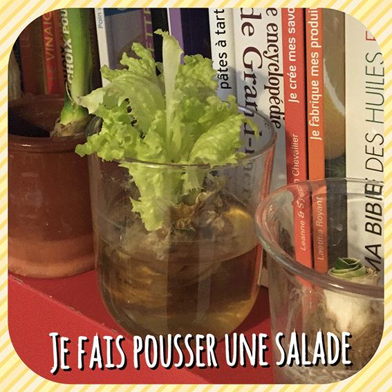 Comment faire pousser une salade dans de l 39 eau le corps la maison l 39 esprit - Quand repiquer les salades ...