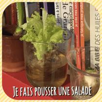 DIY: comment faire pousser une salade dans l'eau