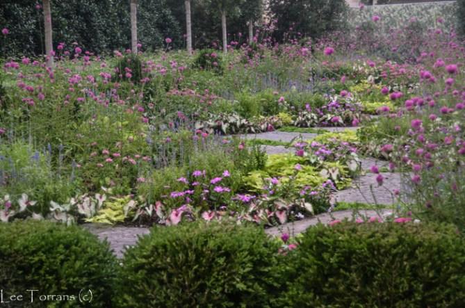 Globe_Amaranthus_Arboretum_Lee_Ann_Torrans