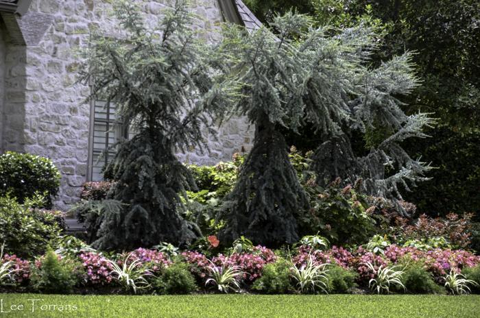 Best Landscaping in Dallas