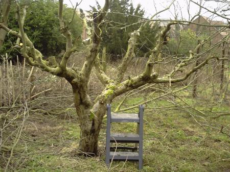 When Pruning Apple Trees