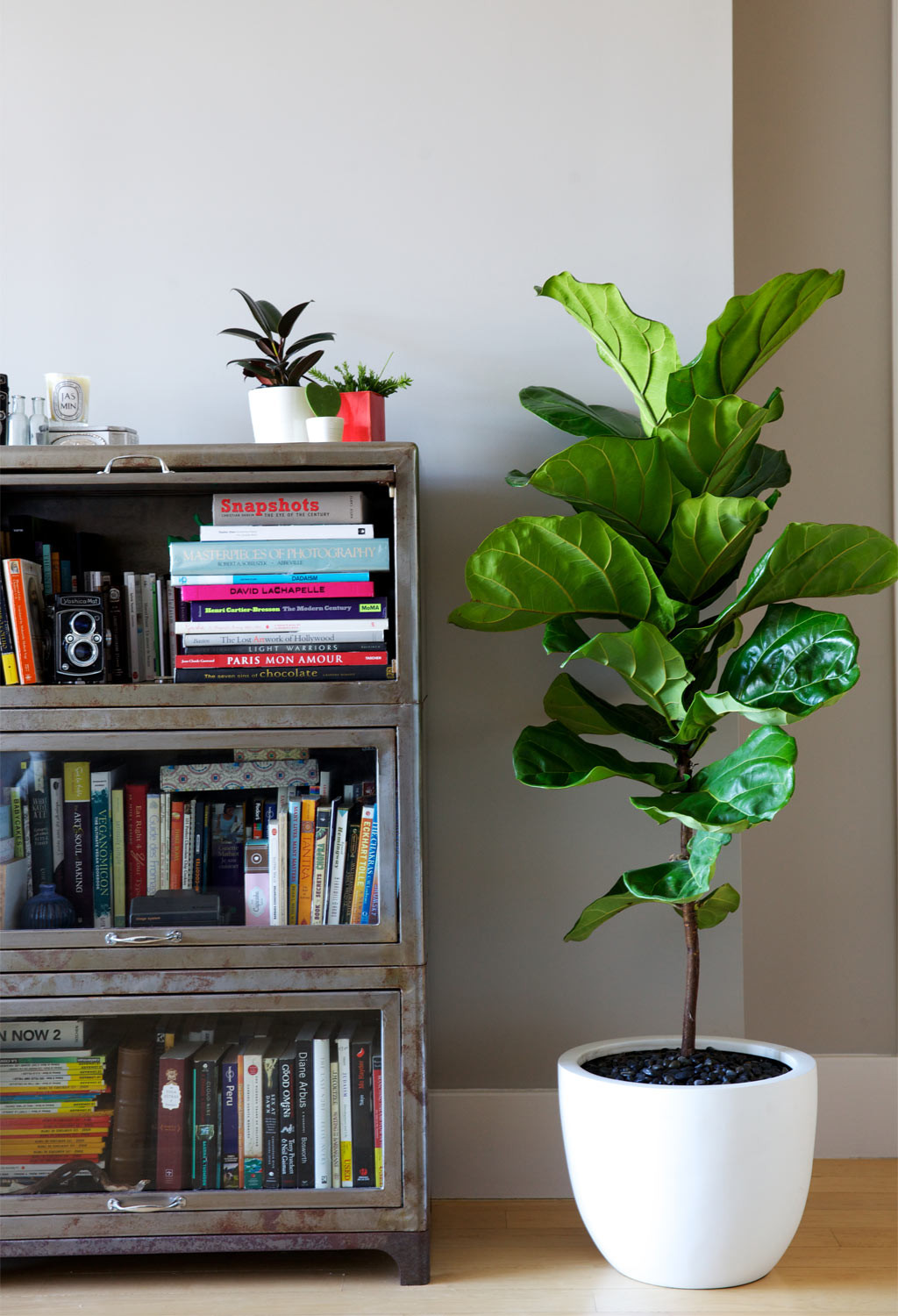 Best Interior Plants Top 5 Indoor Plants And How To Care For Them