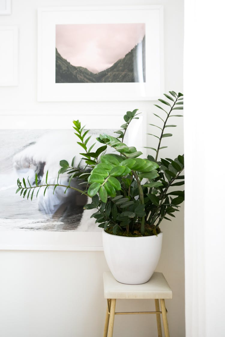 Where To Buy Indoor Plants Online Indoor Plants You Can Buy Online Our Favorite Amazon Shop Live Plants