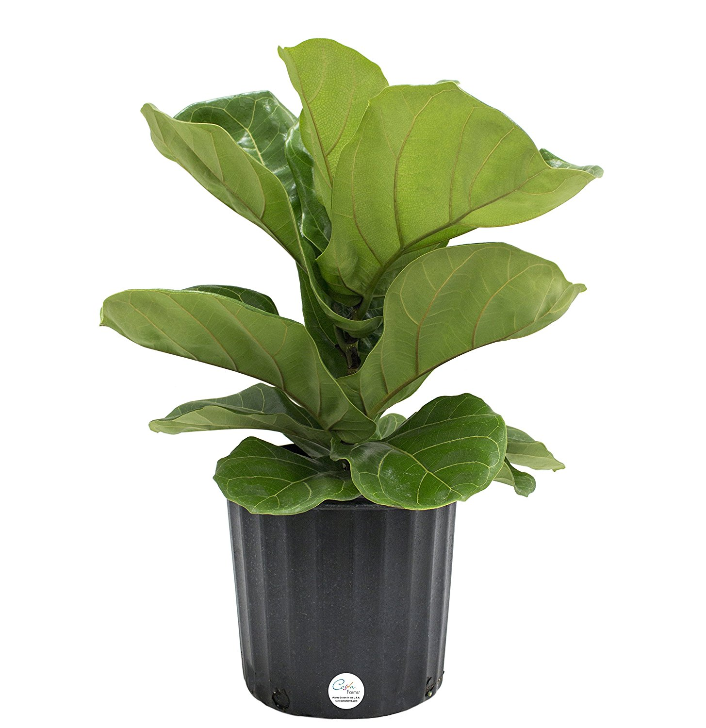 Where To Buy Indoor Plants Online Indoor Plants You Can Buy Online Our Favorite Amazon Shop